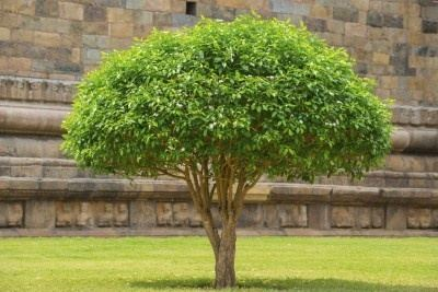 How much should it cost to remove 5 small trees from the ...
