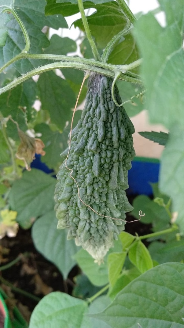Which Are Some Good And Easy Vegetable To Grow At Home In India
