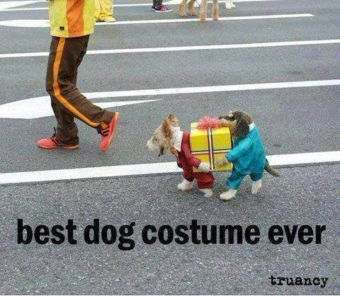 what are the best halloween costumes for dogs quora