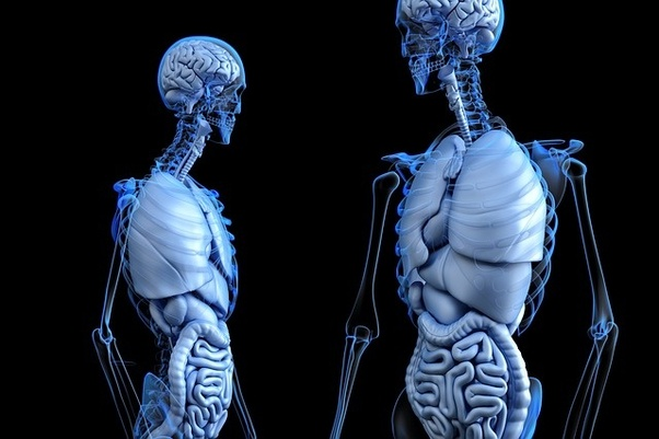 What Is The Fastest Healing Organ In The Human Body Quora