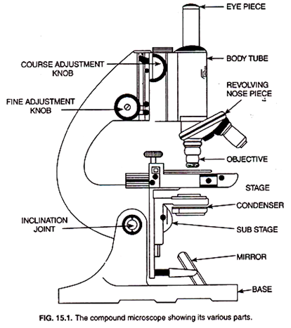 What are the different functions of the parts of a microscope quora this is a diagram of a common compound light microscope the website from which it was found should have the information the person who requested this ccuart Gallery