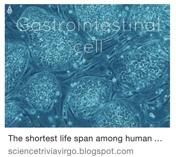 ... those in the colon might be shortest-lived, and skin may give them a  run for their money. However, depending on how you define lifespan, egg and  sperm ...