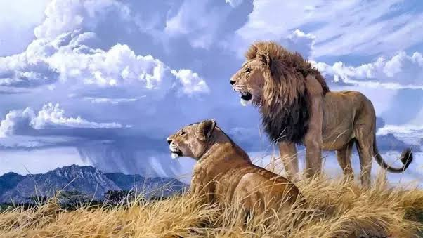 What Exactly Makes The Lion The King Of The Jungle I M Not Even Sure Lions Are The Strongest Animals Quora