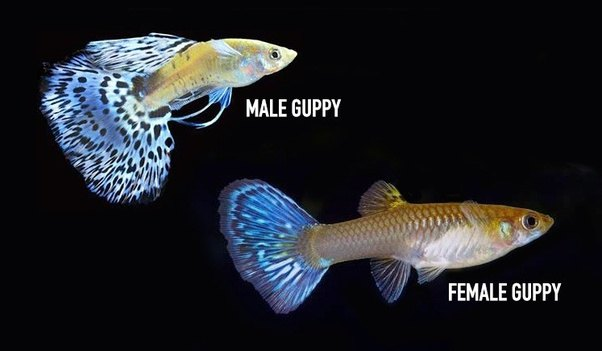 Male to female transformation-8926