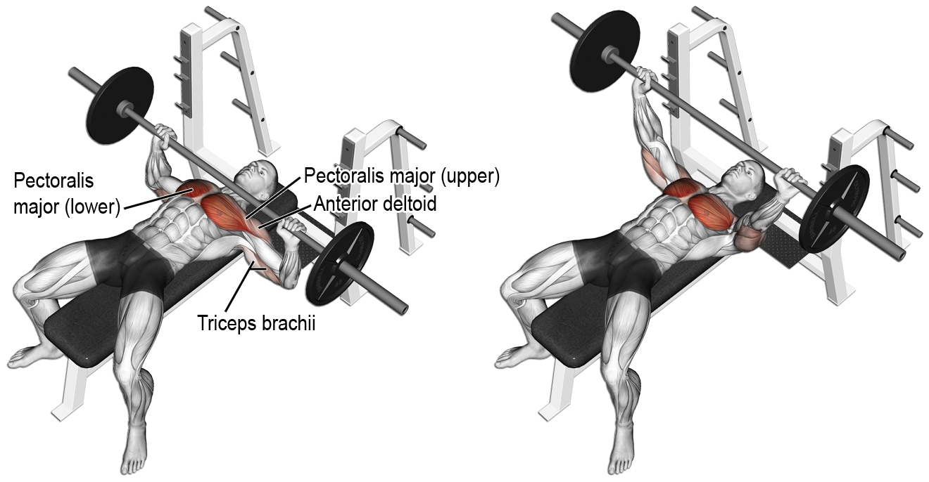 Which Is Better Incline Bench Or Flat Bench Quora