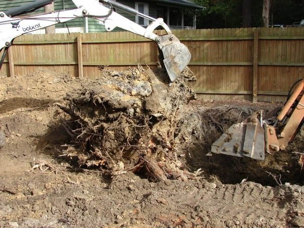 What Is The Best Way To Remove A Tree Stump Quora