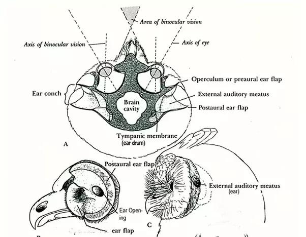 Are owls smart? - Quora - photo#27
