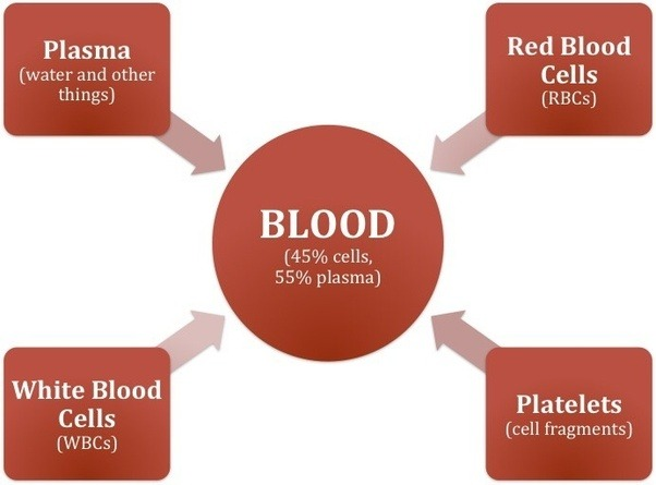 what does plasma blood cells do