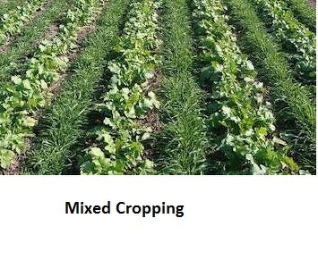 What Is Difference Between Mixed Cropping And Crop Rotation Quora