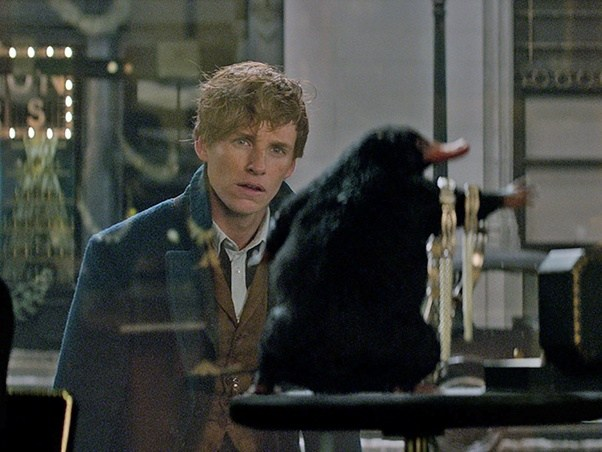 What Is The Niffler S Name In Fantastic Beasts Quora