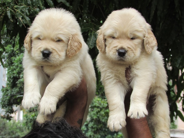 What Is The Best Place To Buy A Puppy In Bangalore Quora