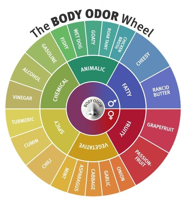 What Is The Equivalent To A Color Wheel, But For Scent