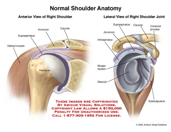 how much weight should be placed on a dislocated shoulder quora rh quora com dislocated shoulder anatomy