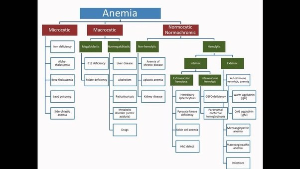 Why is my mother anemic what could be causing her anemia quora