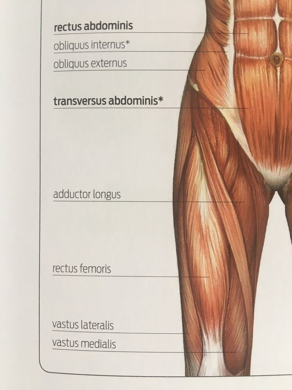 What are the muscles that make up the quadriceps? - Quora