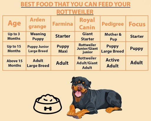 What Is The Best Diet For A 35 Month Old Rottweiler Quora