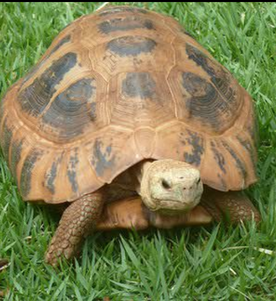 What are the main differences between turtle and tortoise? - Quora
