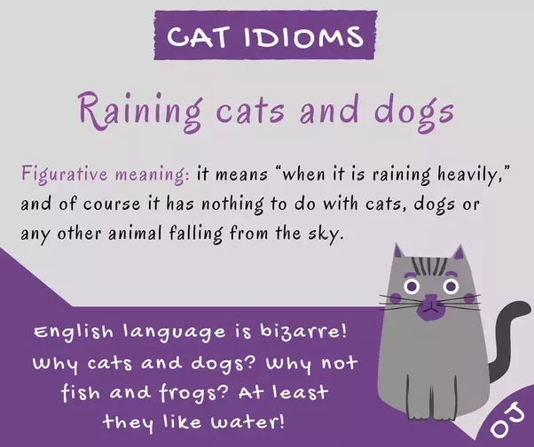 What Does Raining Cats And Dogs Mean Idioms