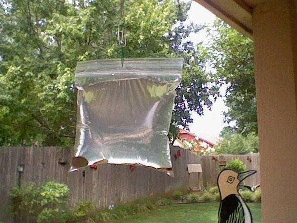 How to get rid of flies outside - Quora