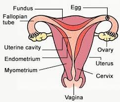 My vagina in snake Girl Insert