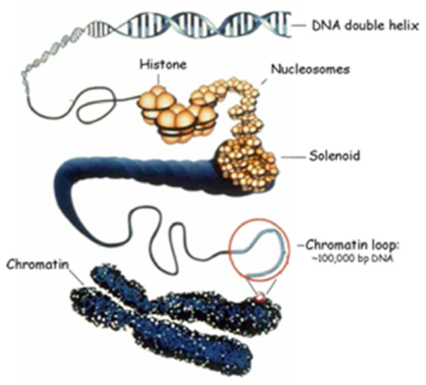 How Can DNA Be Modified?