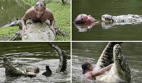 can alligators be tamed