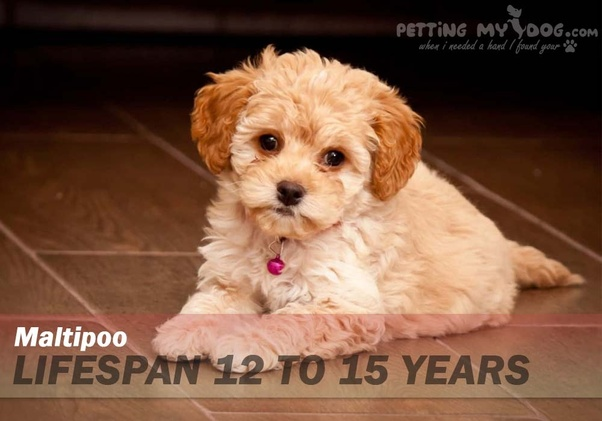 What Dog Breeds Have The Longest Life Span Quora