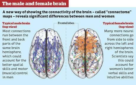 joke wiring womans brain wire center u2022 rh inkshirts co Road Rage Wiring Diagrams Psychology Brain Diagram