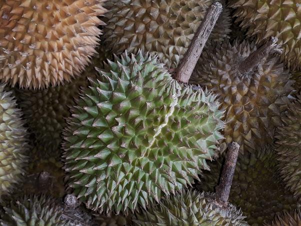 3 Jenis Durian Kalimantan Yang Layak Dicoba