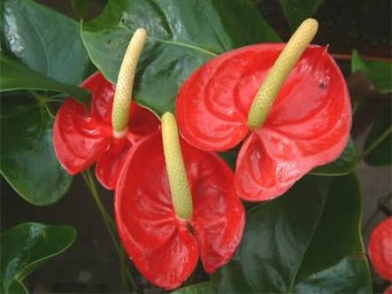 What Are Some Examples Of Monocot Flowers And Dicot Flowers Quora