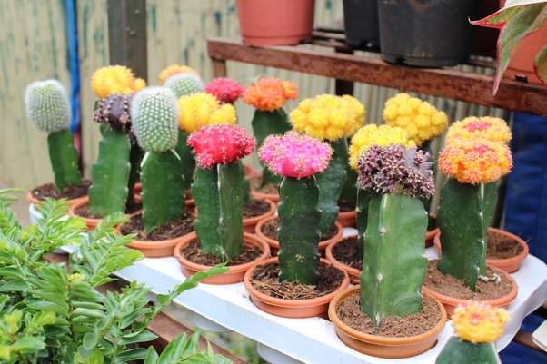 Cactus: Make An Coolest Houseplant To Have In Your Home Or Office, Easy To  Care For And Beautiful In An Unusual Way. Cactus House Plants Are Easy To Grow,  ...