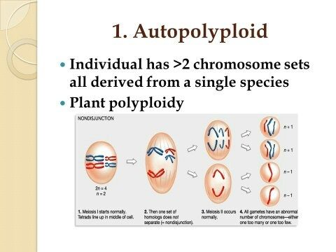 Image Result For Autopolyploidy Definition Biology