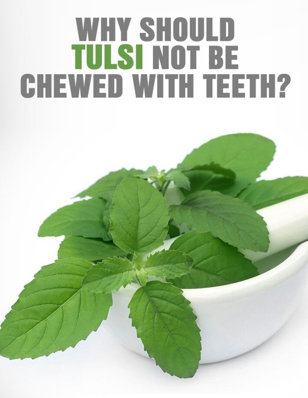 Why tulsi leaves should not be chewed? - Quora