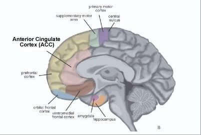 Which parts of the brain control which human behaviours quora functions such as blood pressure and heart rate it also is known as the hub of behavior in the brain and is associated with decision making ccuart Gallery