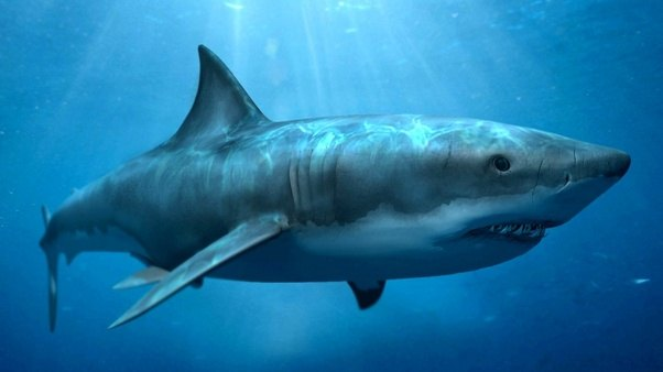 The Bigger Shark Is This One