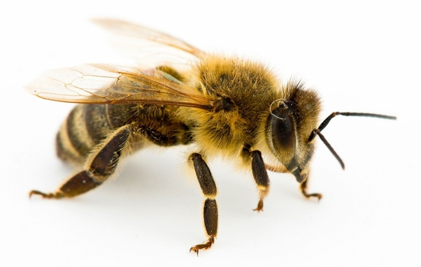 would you rather be a queen bee or a worker bee or a drone if you