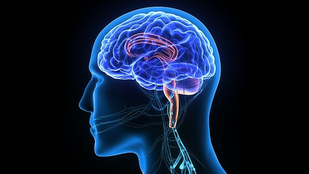 What is the salary of a neurologist in India? - Quora
