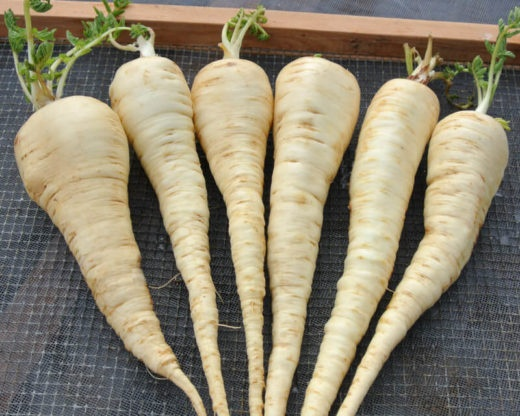 What Is The Flavor Difference Between A Parsnip And A Turnip Which Is Better For Stews Or Are Both Good Quora