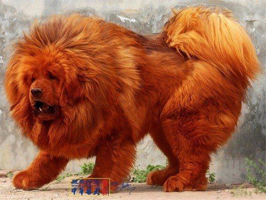 Million Pounds Dog