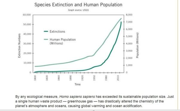 how many species have become extinct due to humans