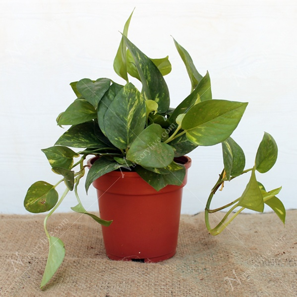 Is it advisable to have indoor plants in our bedroom? If yes