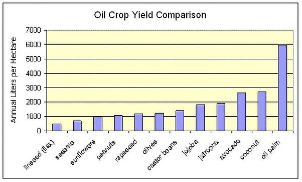 tabel perbandingan tumbuhan penghasil minyak