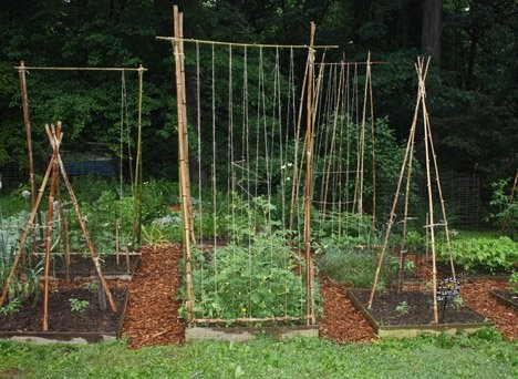 What can I use bamboo sticks for in my backyard? - Quora