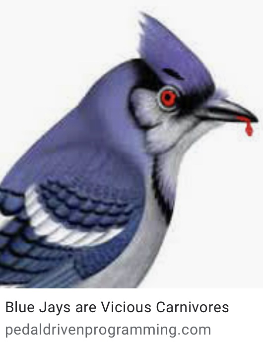 Why Do Blue Jays Eat Other Birds Quora