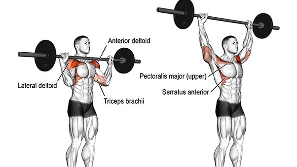Outstanding Which Exercise Is Better Bench Press Or Overhead Press Quora Short Links Chair Design For Home Short Linksinfo