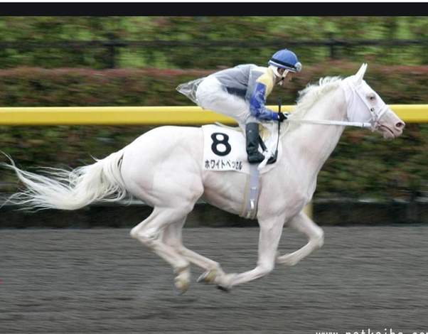How Come We Don T See White Racehorses Quora