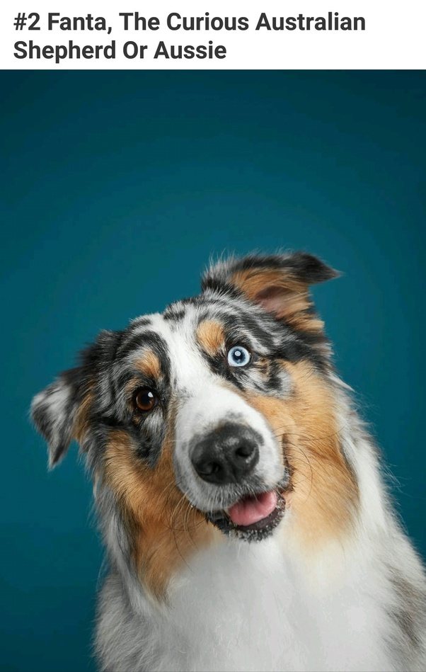 How Many Breeds Of Dogs Exist Quora