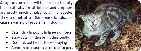 Cómo deshacerse de los gatos callejeros que siguen regresando