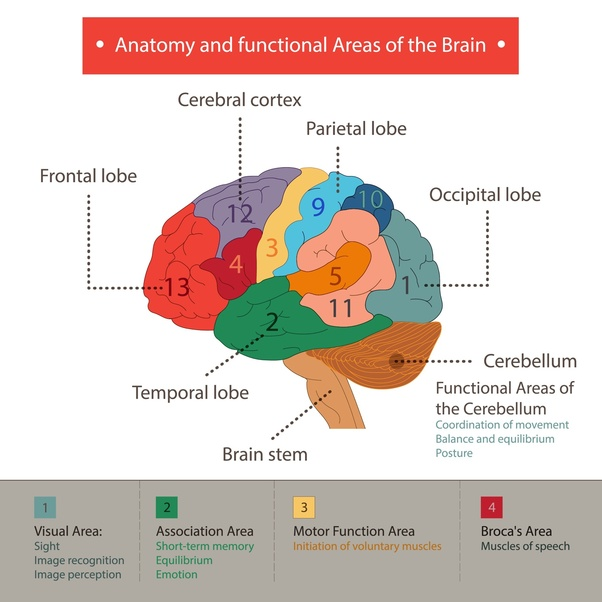 Where do the emotions come from: the brain or the heart ...