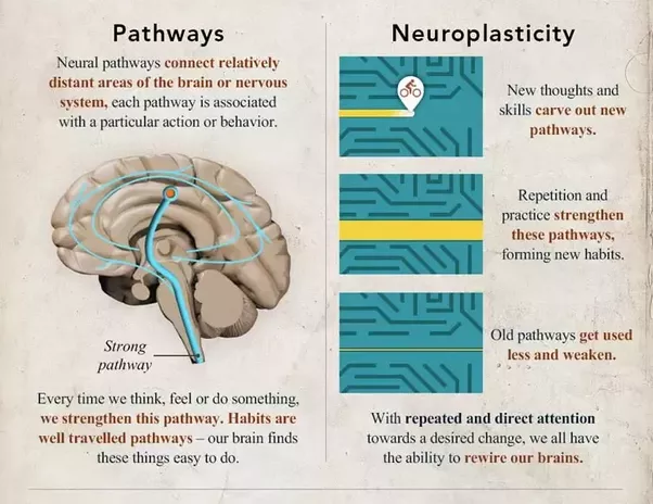 what is neuroplasticity and how does it work  does it have